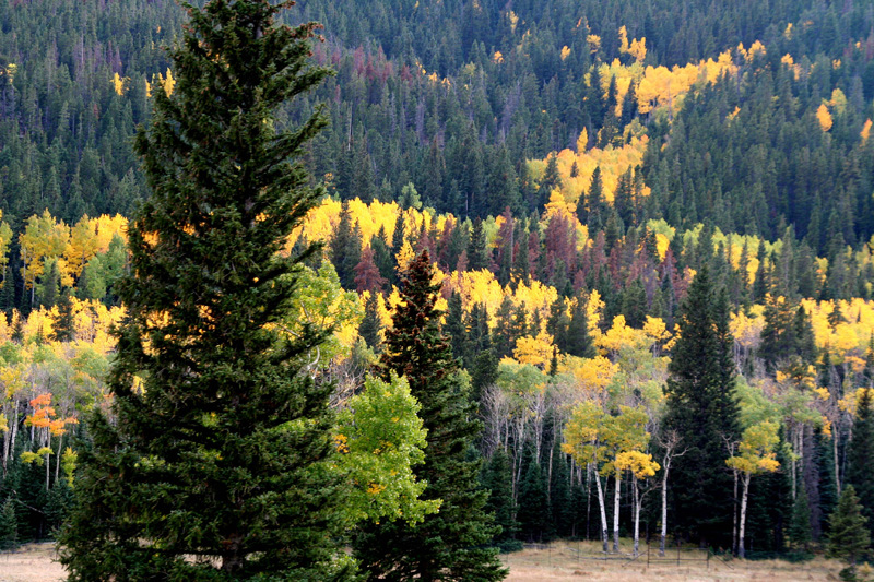 Rocky Mountian National Park in the fall