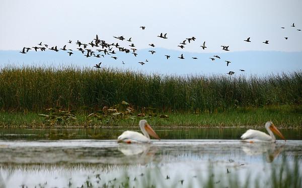 Birds over Marshland 2