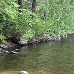 Rocky Point @Lake Massebesic 9
