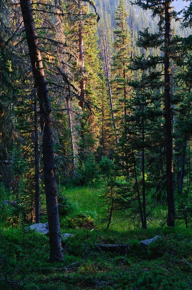 The trail to Spirit Lake