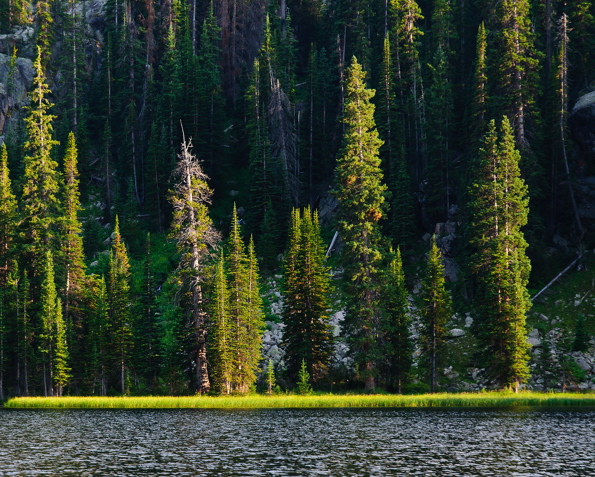 Lodgepole Pines catch the last light of day on Spirit Lake.