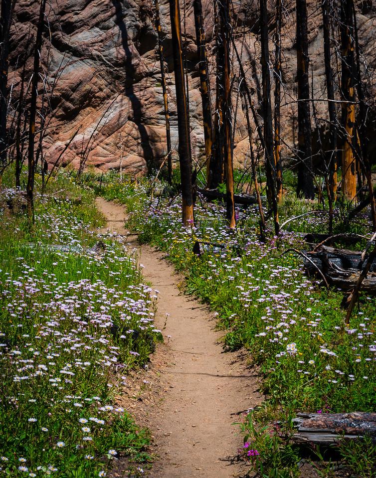 Floral Trails