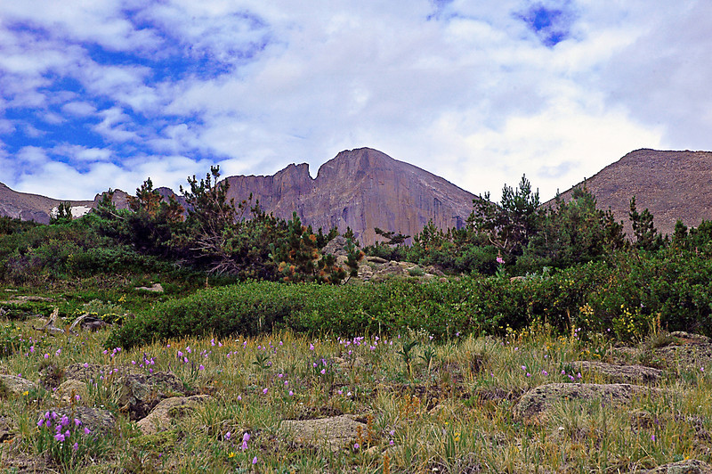 High on the alpine tundra the Diamond of Long's Peak rears above a field of alpine flowers and krummholtz pines.