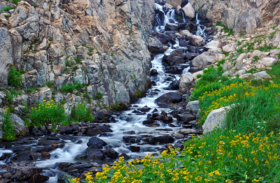 The outlet waters of Bluebird Lake create a lush meadow filled with wildflowers.