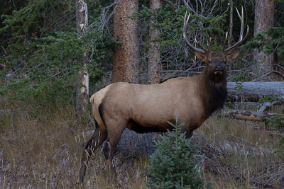 elk-2-17-Enhanced