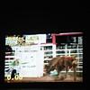 101WildWestPRCA Sat Bulls-7