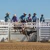 TJHRA Hereford 3 10 18 Bulls-46