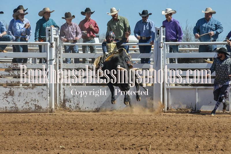 TJHRA Hereford 3 10 18 Bulls-14