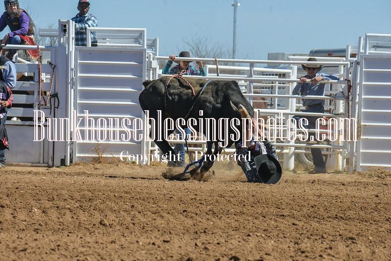 TJHRA Hereford 3 10 18 Bulls-29