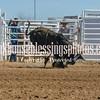 TJHRA Hereford 3 10 18 Bulls-31
