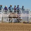 TJHRA Hereford 3 10 18 Bulls-49