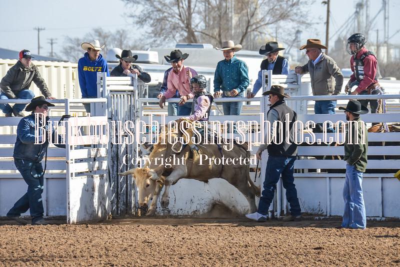 TJHRA Hereford 3 10 18 SaddleBrcStrs-5
