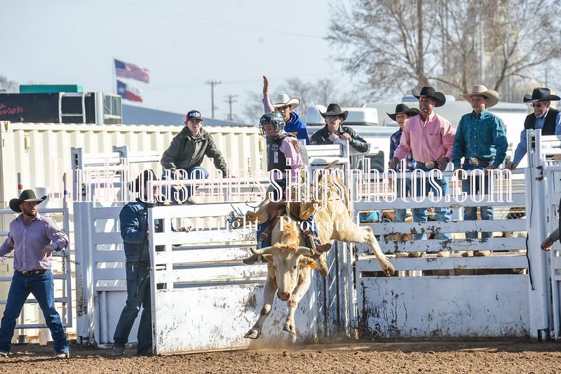 TJHRA Hereford 3 10 18 SaddleBrcStrs-9