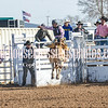 TJHRA Hereford 3 10 18 SaddleBrcStrs-12