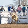 TJHRA Hereford 3 10 18 SaddleBrcStrs-7