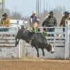 THSRA Hereford 3 11 18 Bulls-18