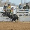 THSRA Hereford 3 11 18 Bulls-40