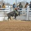 THSRA Hereford 3 11 18 Bulls-12