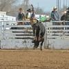 THSRA Hereford 3 11 18 Bulls-43