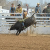 THSRA Hereford 3 11 18 Bulls-36