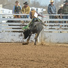 THSRA Hereford 3 11 18 Bulls-35
