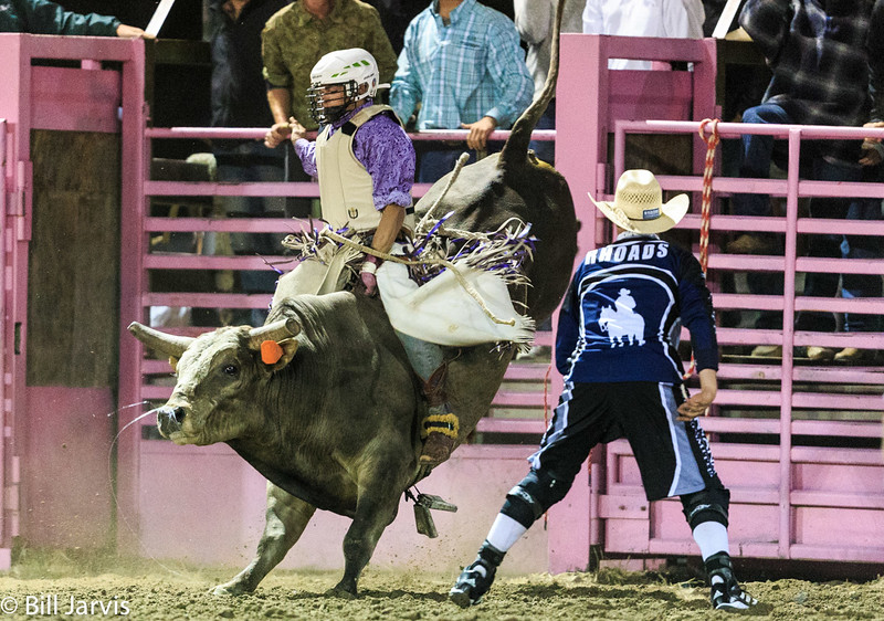 Bulls and Bull Fighters, Deer Lodge, Montana