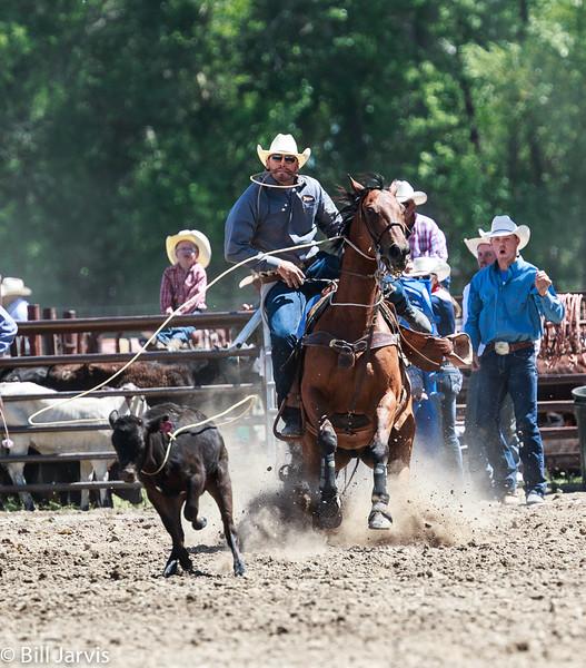 Tie Down Roping, Choteau Montana