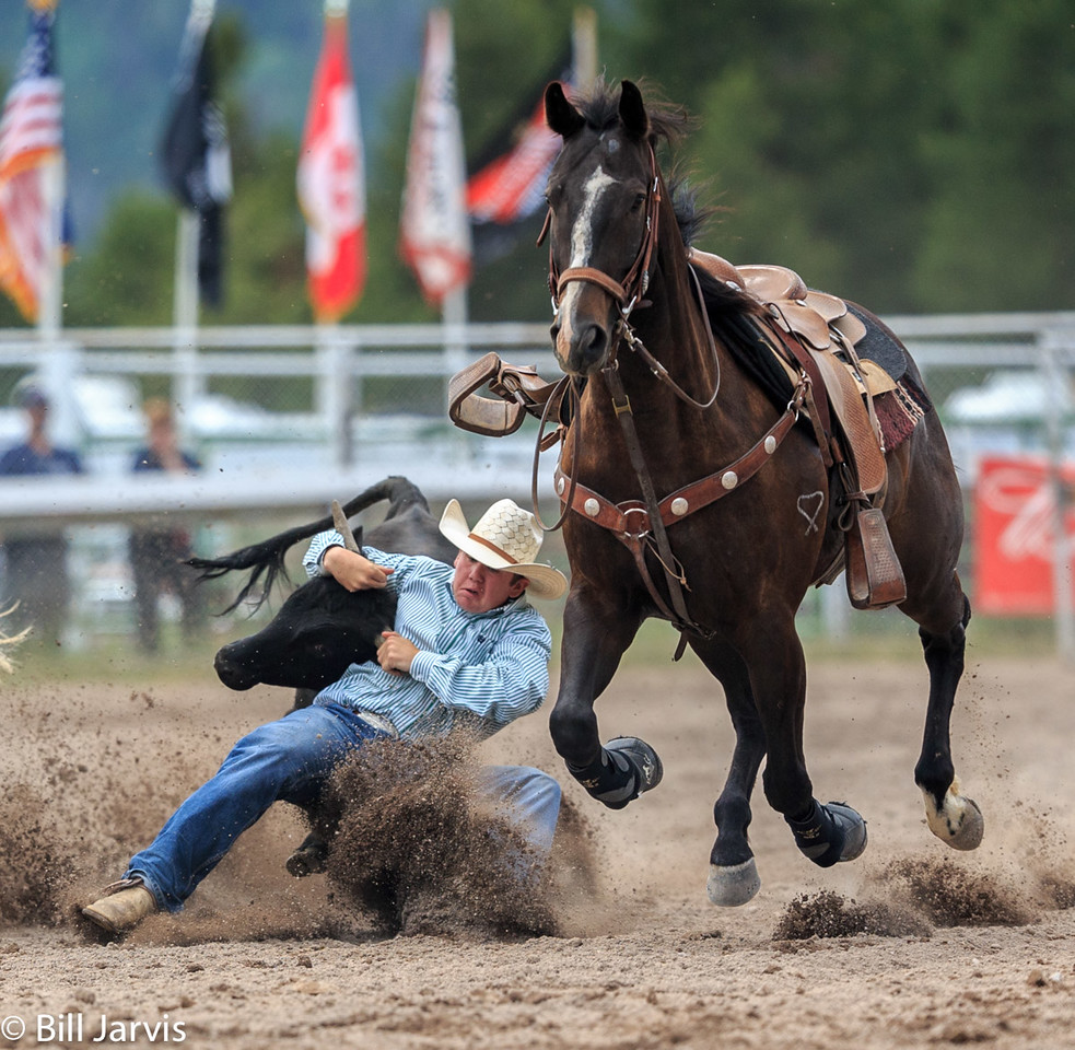 Steer Wrestling, Lincoln Montana