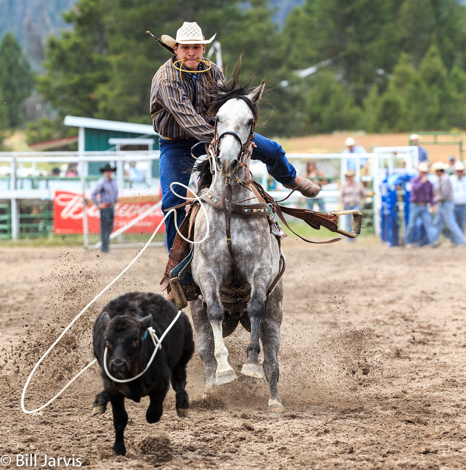 Tie Down Roping, Lincoln Montana