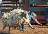 20120628_Rodeo_0021