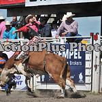 MS Sun Rodeo 323