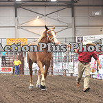 Draft Horse Futurity 005