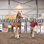 Draft Horse Futurity 003