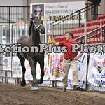 Draft Horse Futurity 008