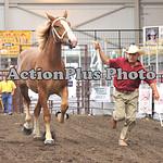 Draft Horse Futurity 004