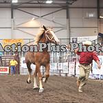 Draft Horse Futurity 006