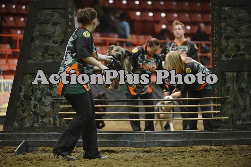 12MRCA Finals Wild Dogs 02