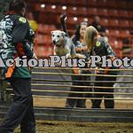 12MRCA Finals Wild Dogs 11
