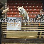 12MRCA Finals Wild Dogs 14