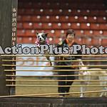 12MRCA Finals Wild Dogs 12