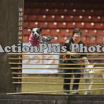 12MRCA Finals Wild Dogs 13