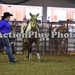 Ranch Horse 003
