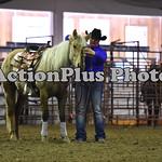 Ranch Horse 002