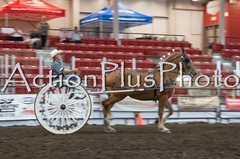 18Virden Draft Horse (4 of 100)