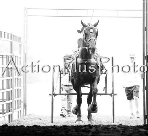 18Virden Draft Horse (12 of 100)