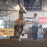 18Virden Draft Horse (30 of 100)