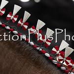 18Virden Draft Horse (45 of 100)
