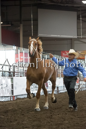 18Virden Draft Horse (47 of 100)