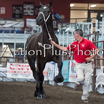 18Virden Draft Horse (51 of 100)