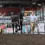 18Virden Draft Horse (57 of 100)
